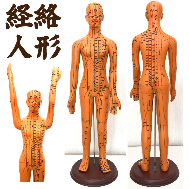 経絡・経穴(ツボ)人形