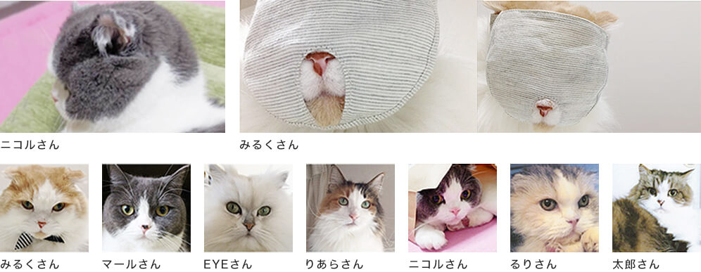 短頭種の猫モニターさん