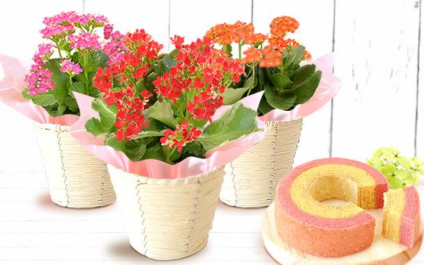 敬老の日 2018 花とお菓子セット(定番)