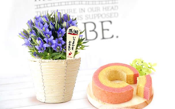 敬老の日のプレゼント 花(りんどう)スイーツセット