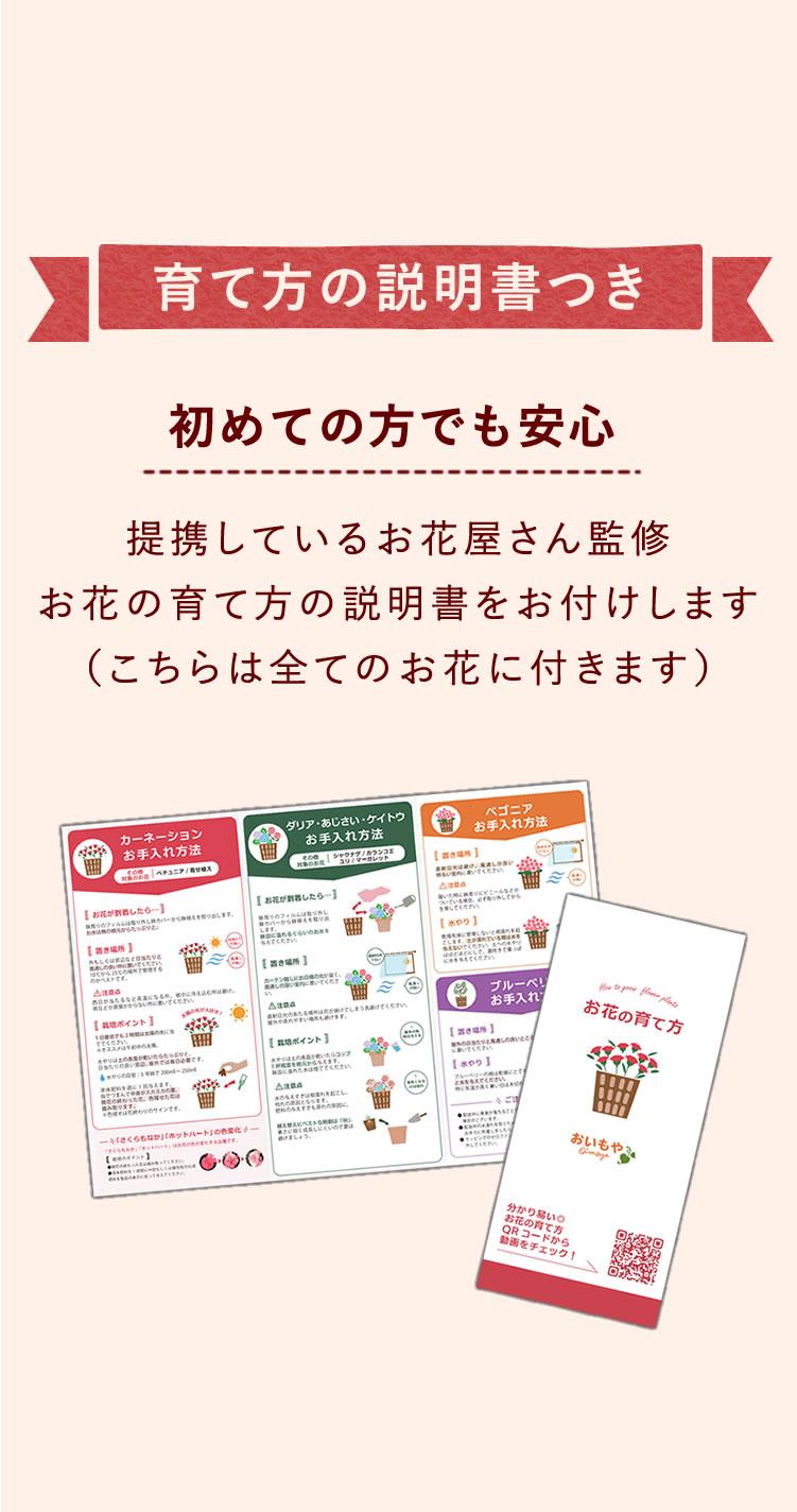 選べる花D_ダリア・ボニータ