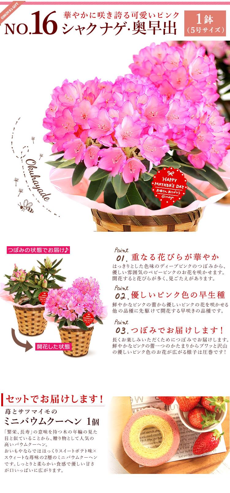 選べる花D_シャクナゲ