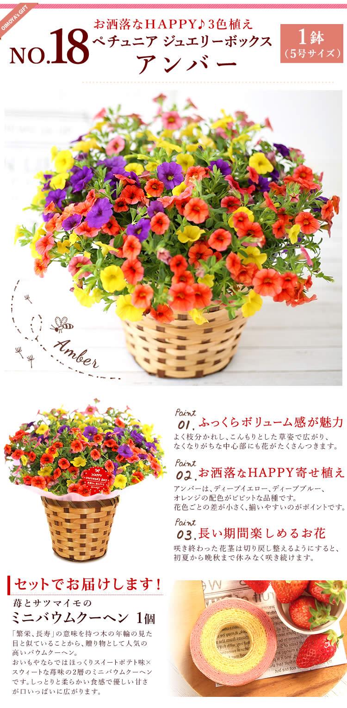 選べる花D_トルコキキョウ