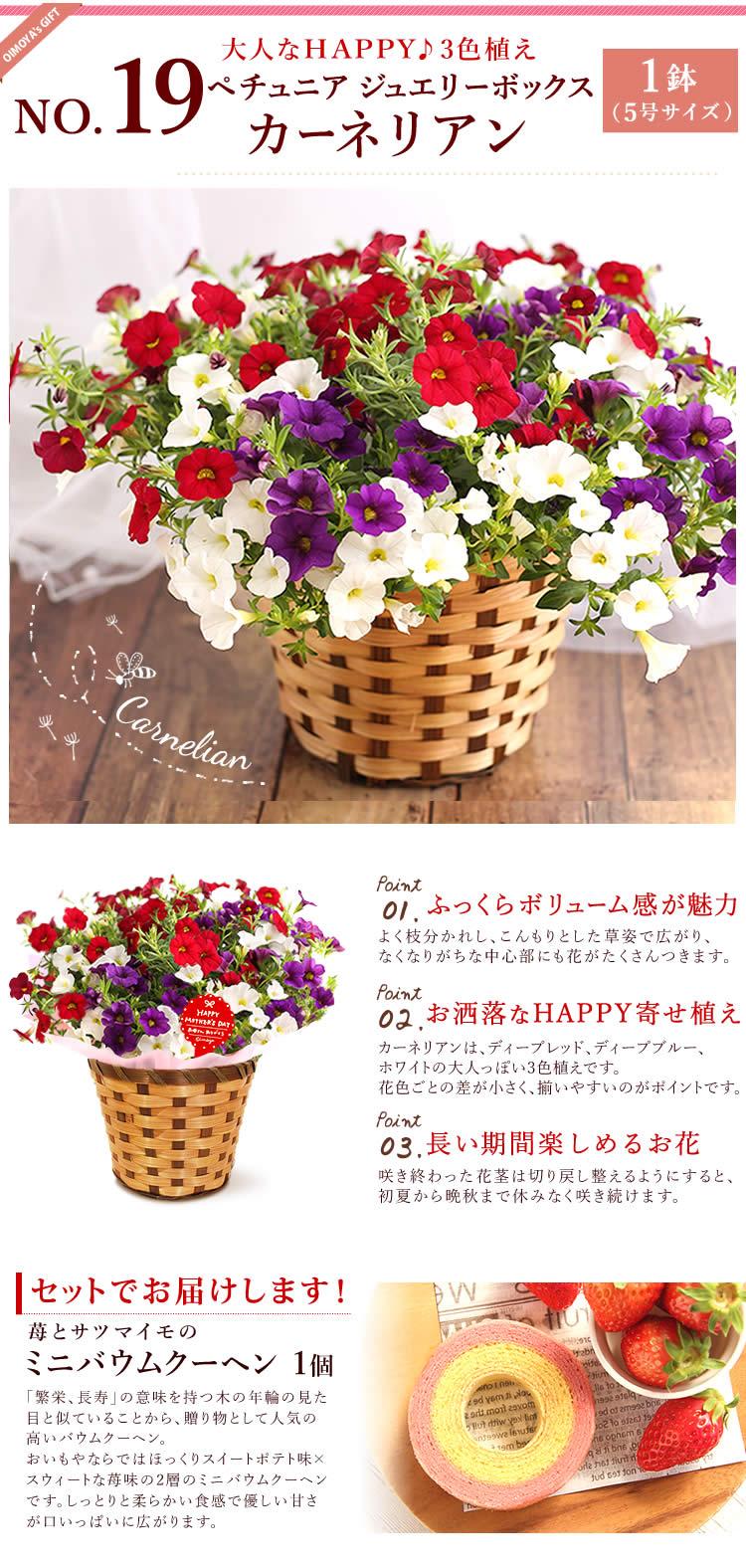 選べる花D_ペチュニア・シトリン