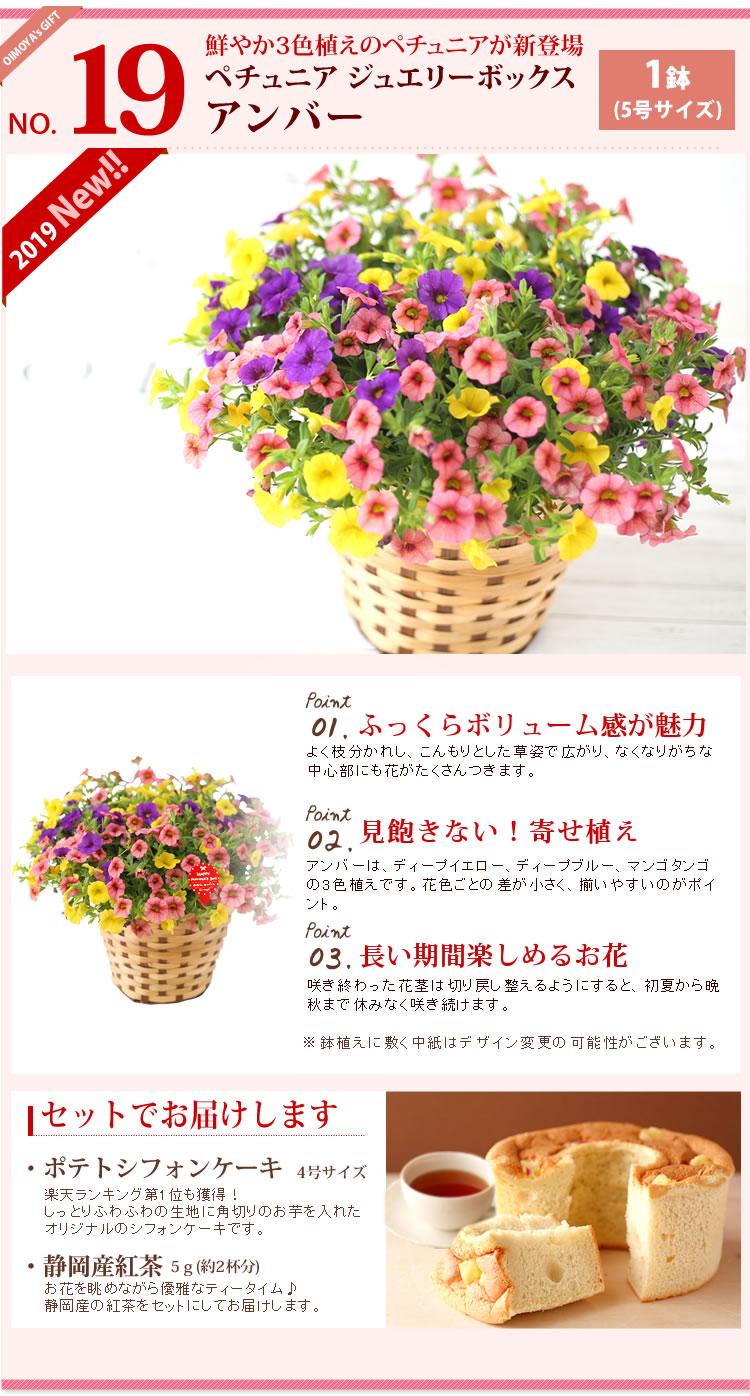選べる花D_ペチュニア・アンバー