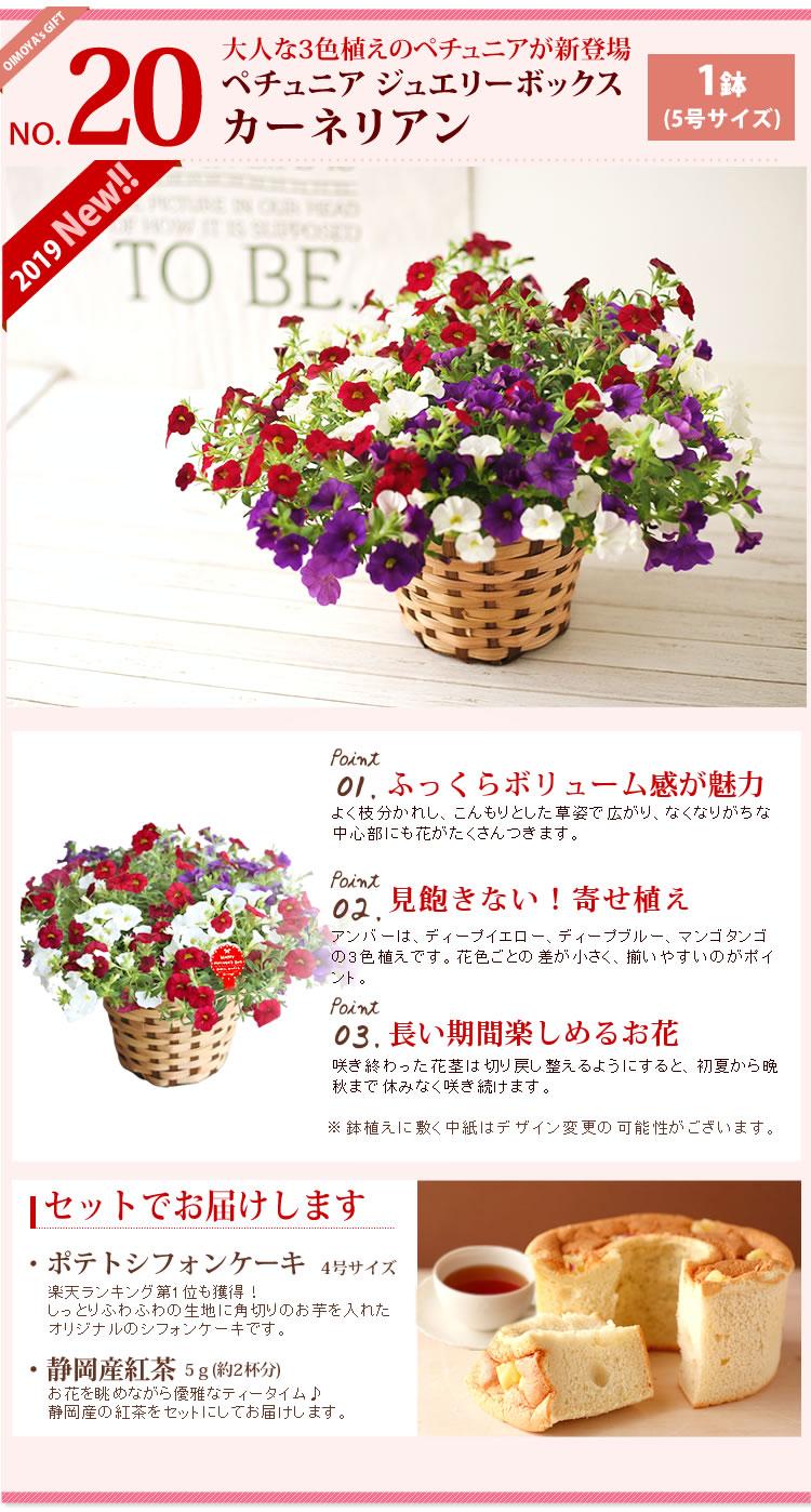 選べる花D_ペチュニア・カーネリアン