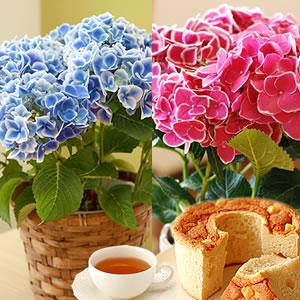 母の日 花の種類 チボリ まとめ