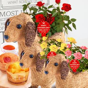 母の日 2018 薔薇わんちゃん(3号鉢) カップケーキ まとめ