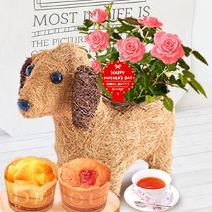 母の日 2019年  薔薇わんちゃん【ピンク】(3号鉢) スイーツ