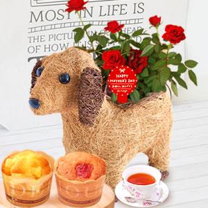 母の日 2019年  薔薇わんちゃん【赤】(3号鉢) スイーツ