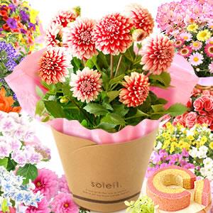 母の日 花の種類 選べる花D 全部
