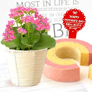母の日 プレゼント 人気カランコエとスイーツ 濃いピンク