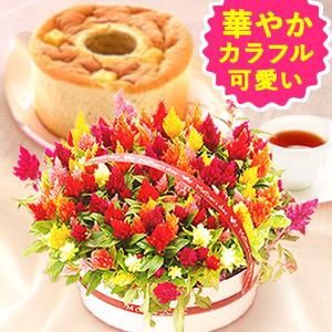 母の日 カーネーション以外 ケイトウ花鉢とシフォン