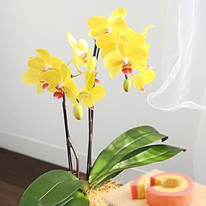 母の日のプレゼント 花ナオミゴールド
