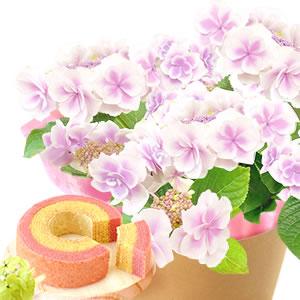 母の日 花の種類 こんぺいとうピンク