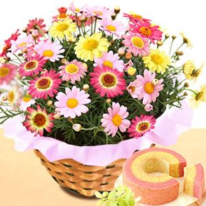母の日 花の種類 マーガレット