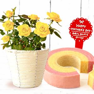 母の日 プレゼント バラとスイーツ 黄色