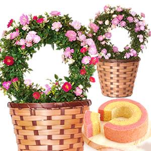 母の日 花の種類 薔薇 まとめ