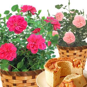 母の日 花の種類 薔薇 スイートハートメモリー まとめ