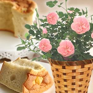 母の日 花の種類 薔薇 スイートハートメモリー 薄いピンク
