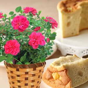 母の日 花の種類 薔薇 スイートハートメモリー 濃いピンク