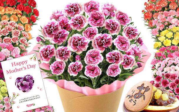母の日 2016 人気カーネーションと和菓子  border=