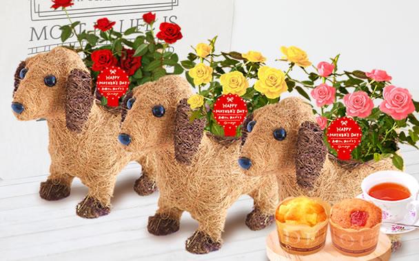 母の日 2019年  薔薇わんちゃん(3号鉢) カップケーキ まとめ