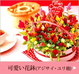 母の日プレゼント 可愛い鉢花