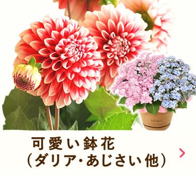 母の日ギフト 可愛い鉢花 アジサイ ユリ など