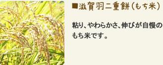 滋賀羽二重餅 粘り、やわらかさ、伸びが自慢のもち米です。
