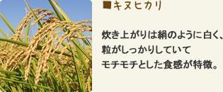 キヌヒカリ 炊き上がりは絹のように白く、粒がしっかりしていてモチモチとした食感が特徴。