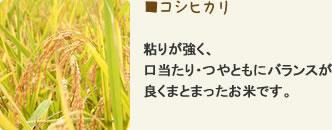 コシヒカリ 粘りが強く、口当たり・つやともにバランスが良くまとまったお米です。