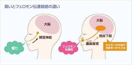 ヒトフェロモンの発見 | フェロモン香水ラボ |