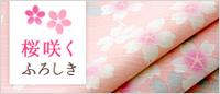 桜咲くふろしき