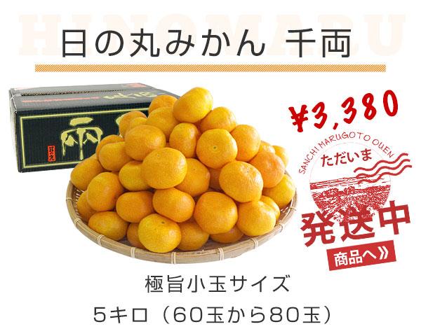 日の丸みかん小玉5kg