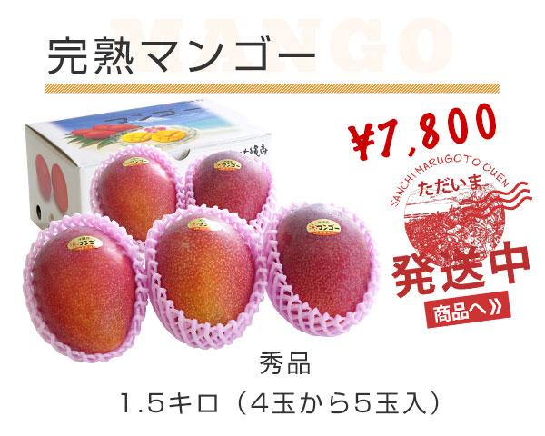 完熟沖縄マンゴー 秀品 1.5キロ