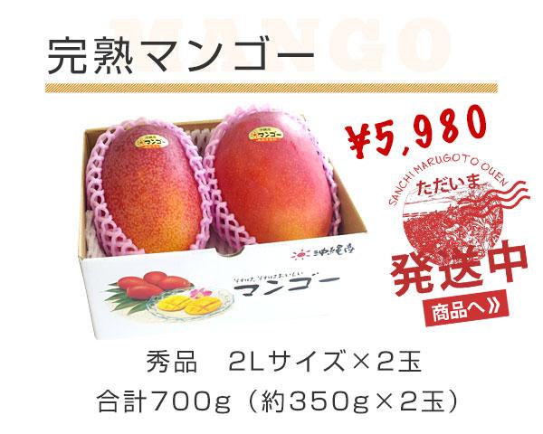 完熟マンゴー 秀品 2Lサイズ×2玉