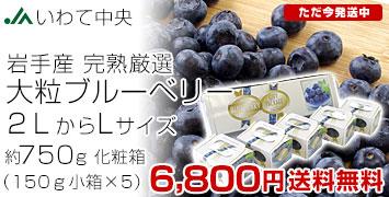ブルーベリー 大粒 Lサイズ750g
