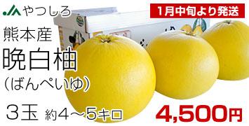 晩白柚 3玉
