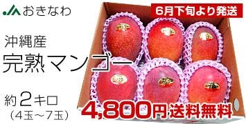 沖縄マンゴー 約2キロ