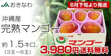 沖縄マンゴー 約1.5キロ