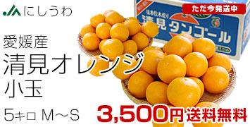 小玉 5キロ
