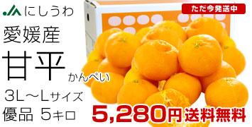 甘平5キロ