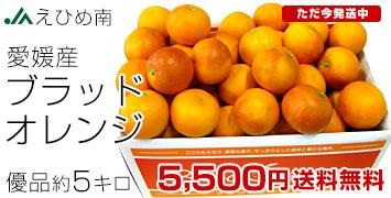 ブラッドオレンジ5kg