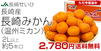 長崎みかん2L
