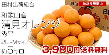 田村清見オレンジ秀品