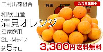 田村ご家庭用清見オレンジ