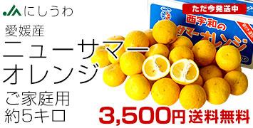 ニューサマーオレンジ ご家庭用