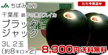 ブラックジャック 3L×2玉