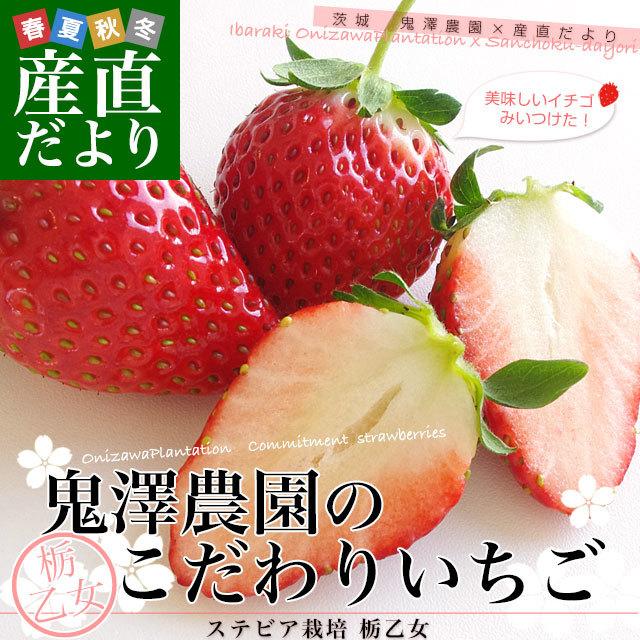鬼澤農園イチゴ
